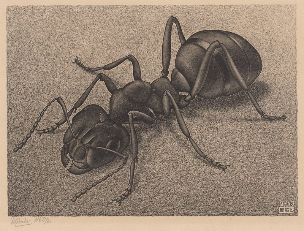 M.C. Escher, Ant, lithograph, May 1943