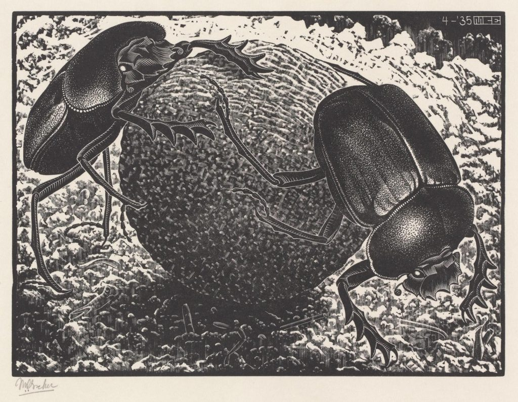 M.C. Escher, Scarabs wood engraving, April 1935