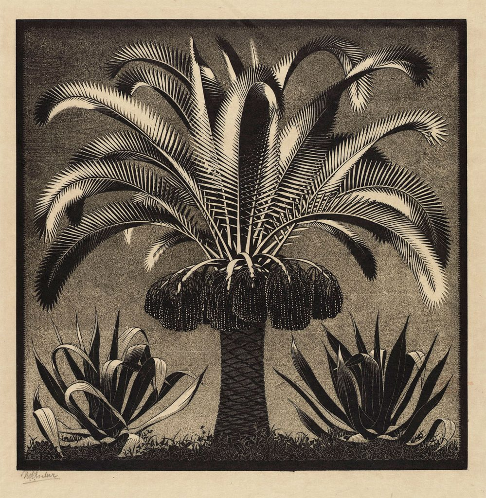 M.C. Escher, Palm, wood engraving in black and grey-green, printed from two blocks, February 1933
