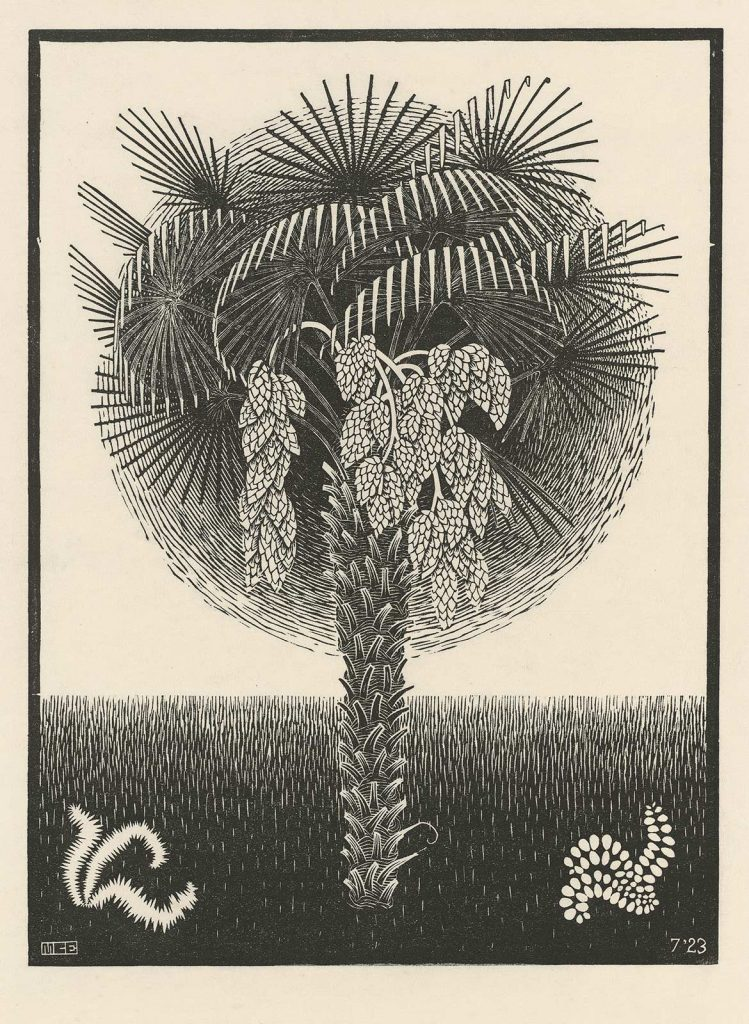 M.C. Escher, Palm Tree, woodcut, February 1923